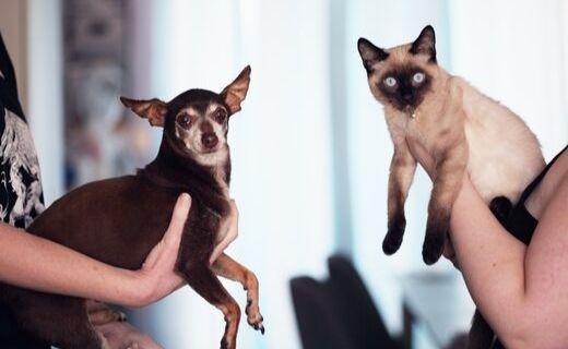 gatos y giardia